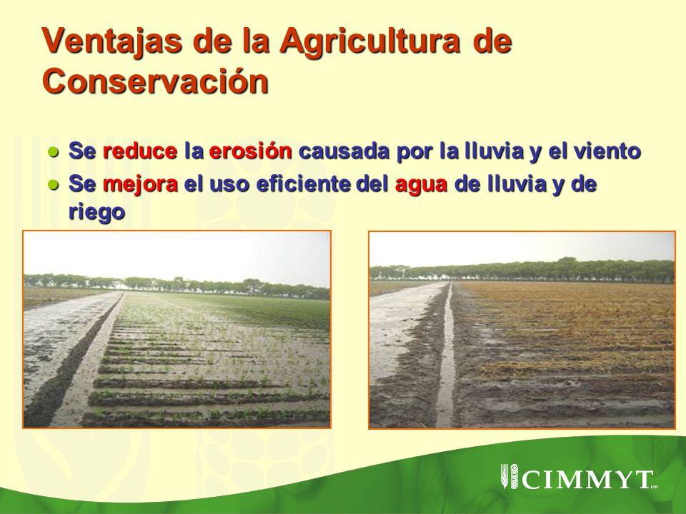 Ventajas de la Agricultura de Conservación