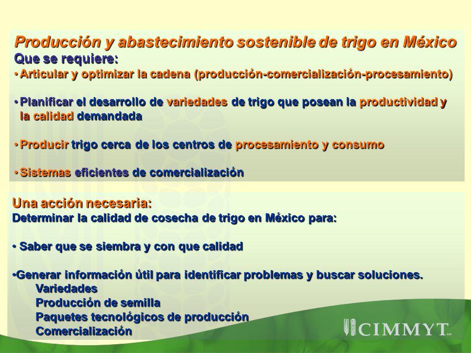 Producción y abastecimiento sostenible de trigo en México