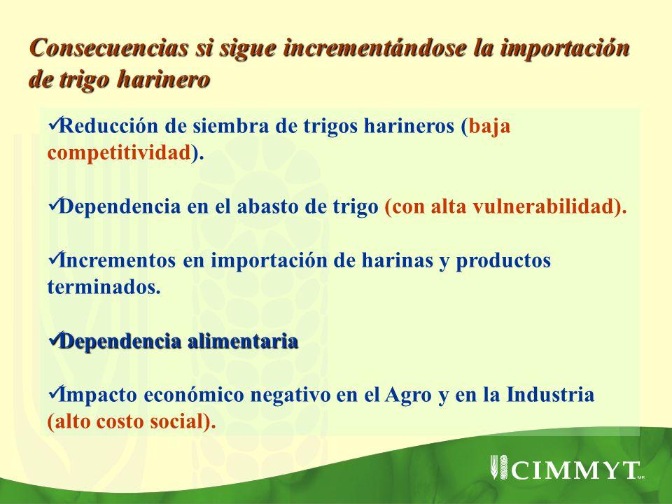 Consecuencias si sigue incrementándose la importación de trigo harinero