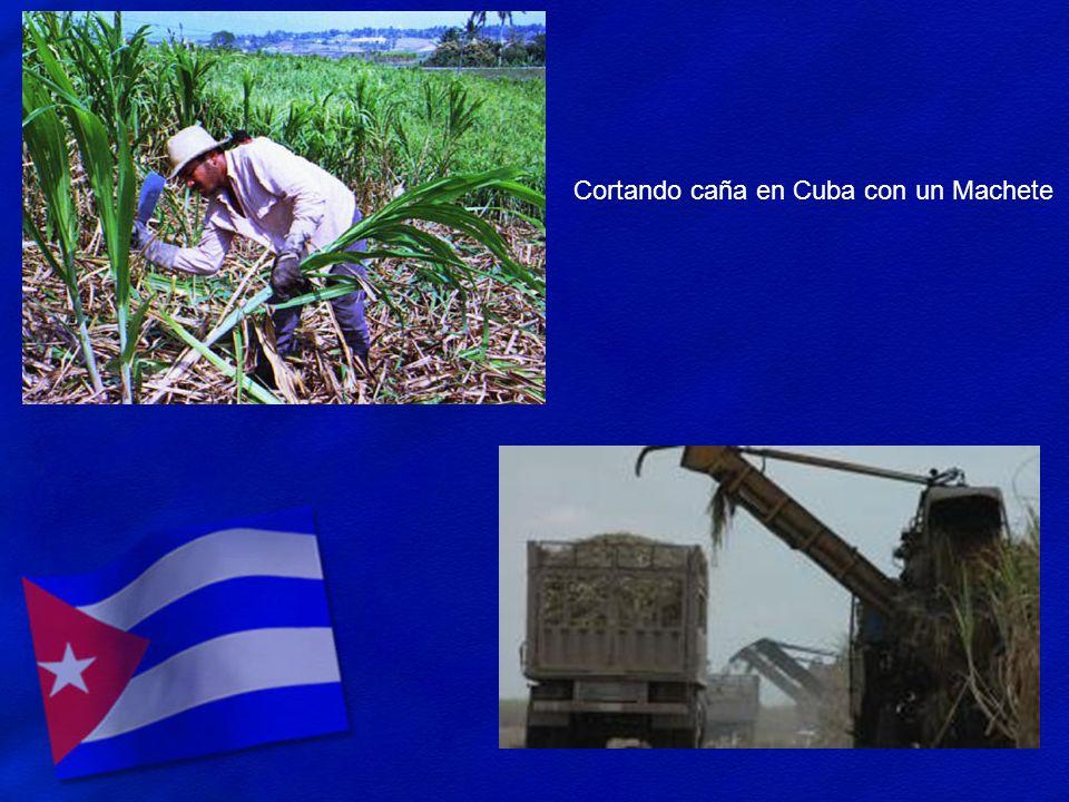 Cortando caña en Cuba con un Machete