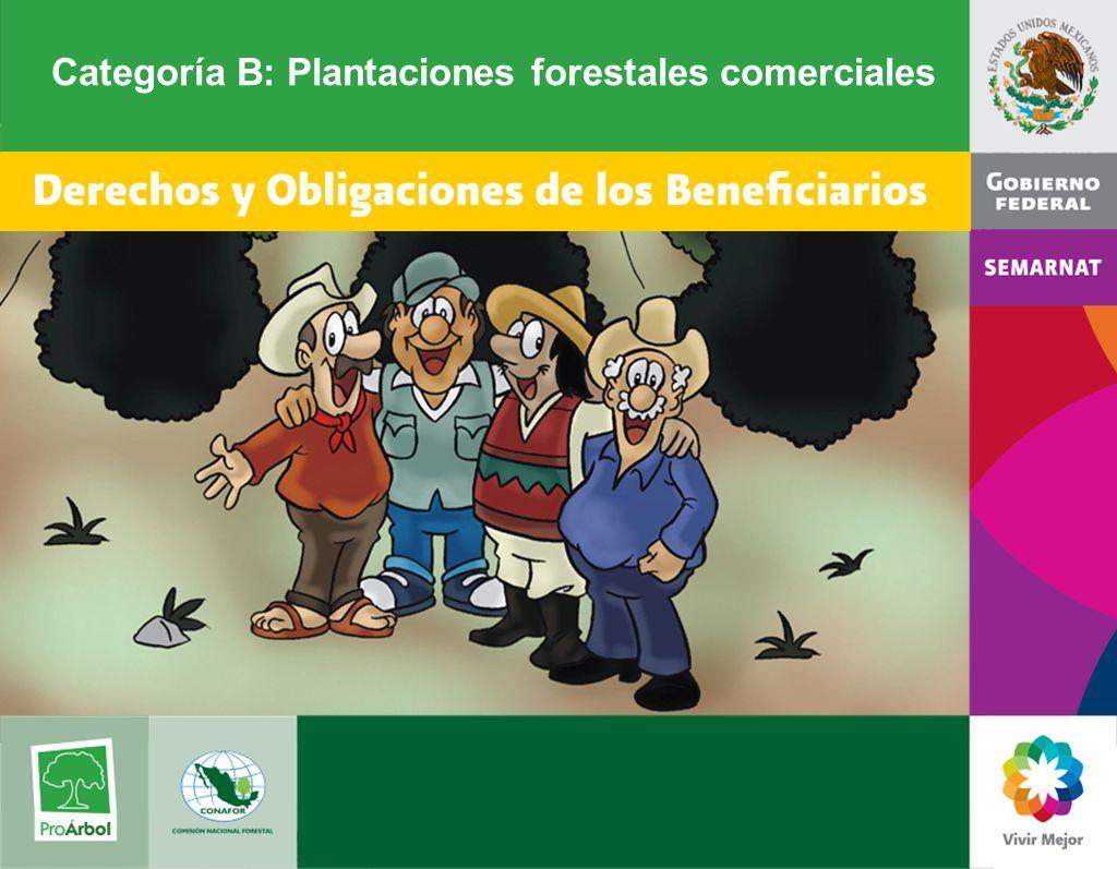Categoría B: Plantaciones forestales comerciales