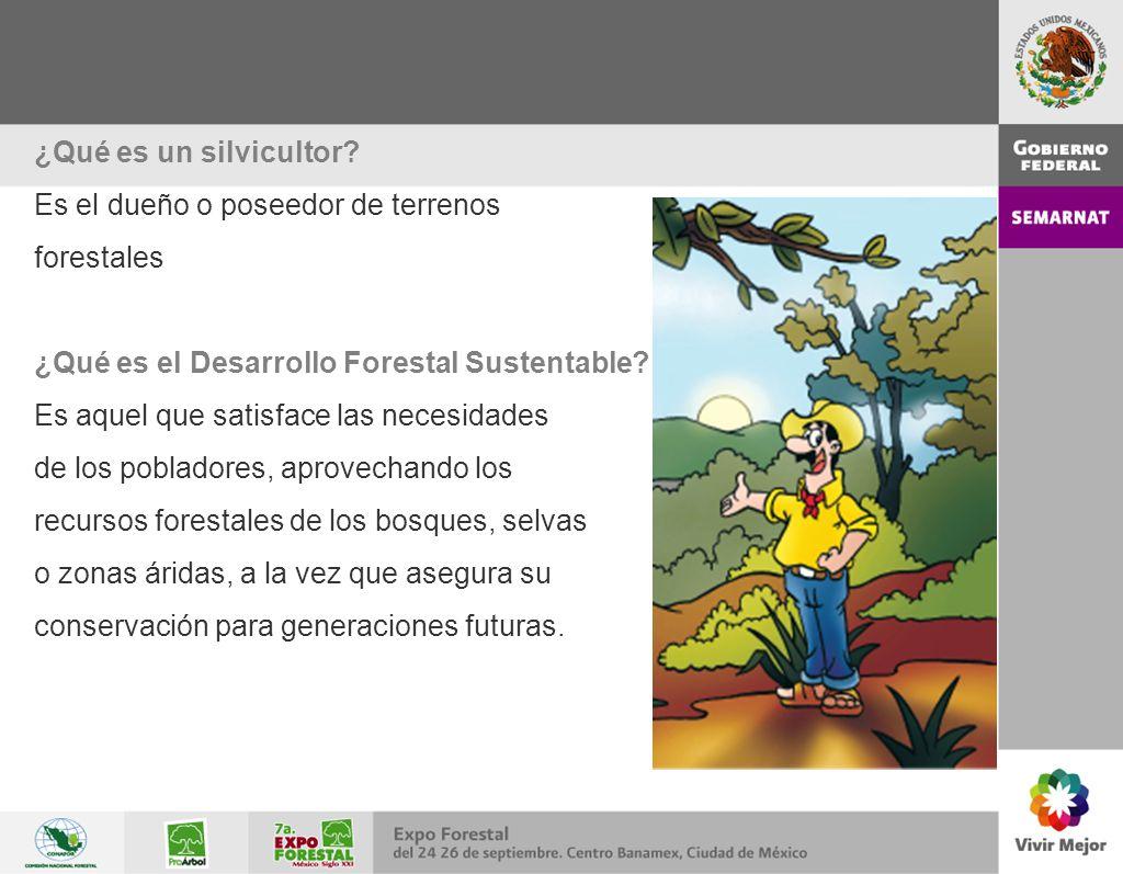 ¿Qué es un silvicultor Es el dueño o poseedor de terrenos. forestales. ¿Qué es el Desarrollo Forestal Sustentable