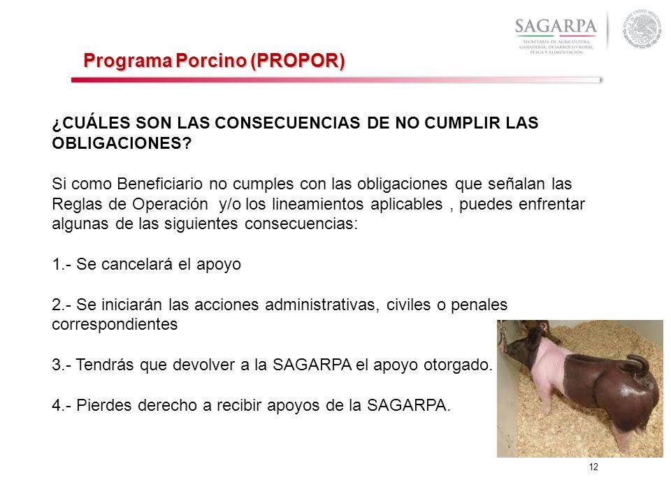 Programa Porcino (PROPOR)