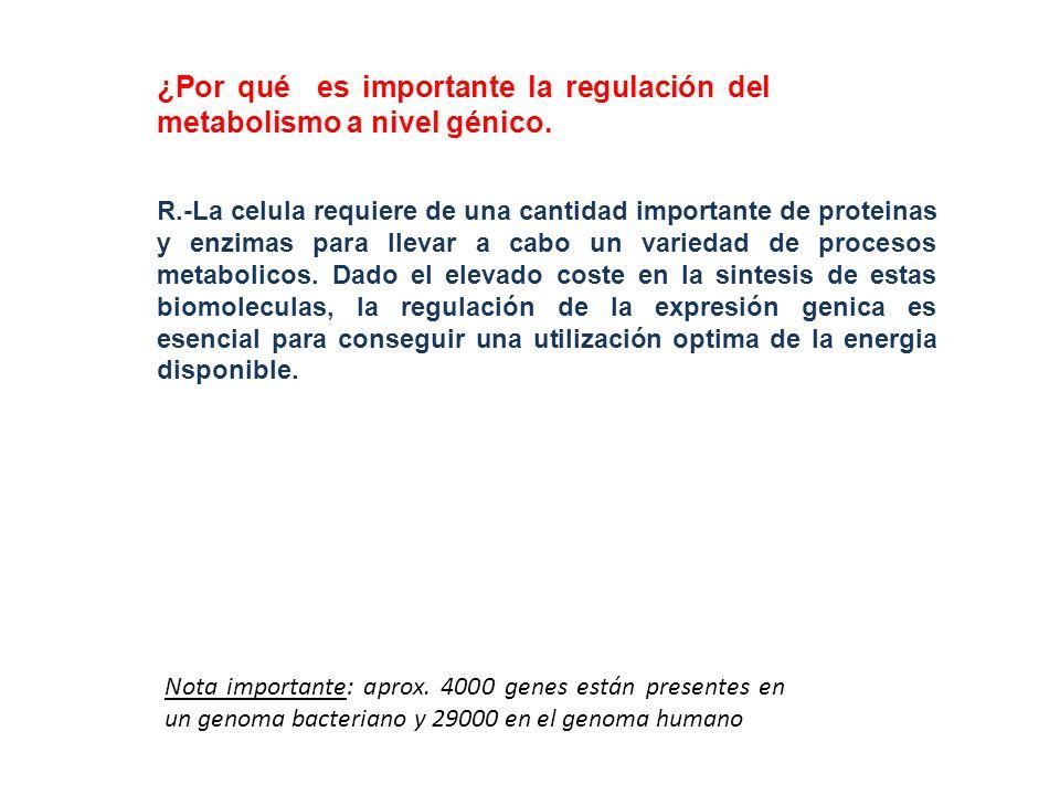 ¿Por qué es importante la regulación del metabolismo a nivel génico.