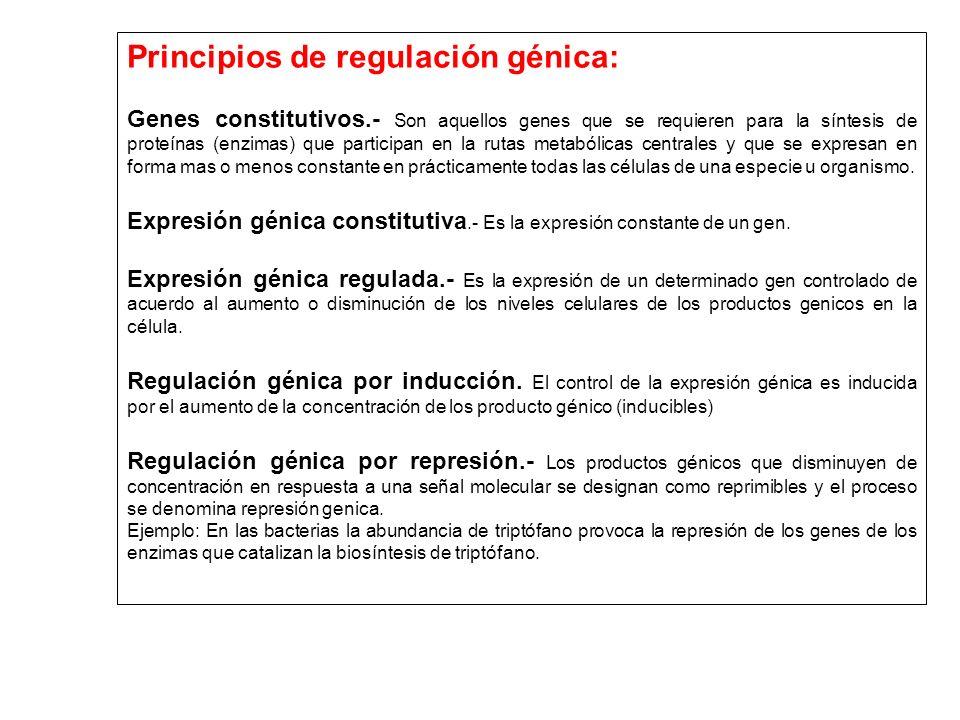 Principios de regulación génica: