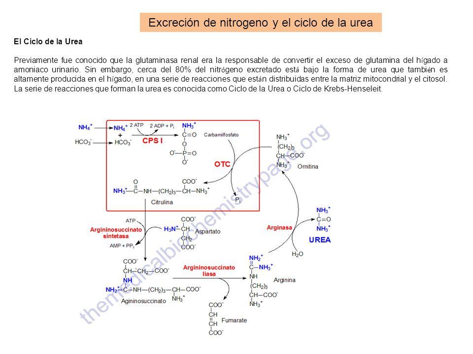 Excreción de nitrogeno y el ciclo de la urea