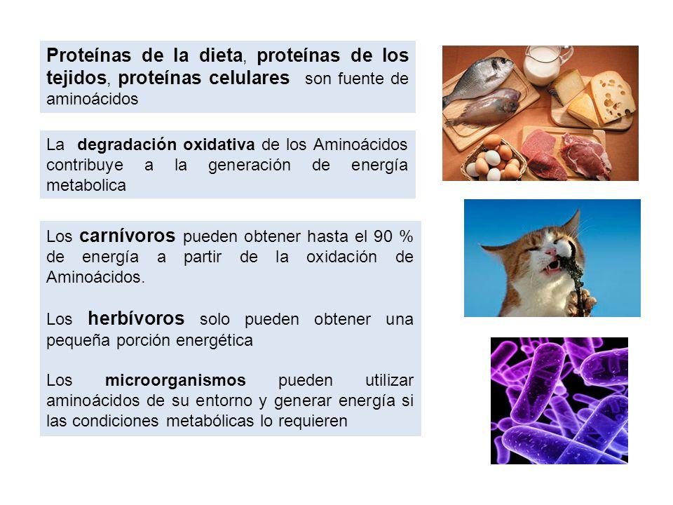 bacteriología, una rama de la microbiología.
