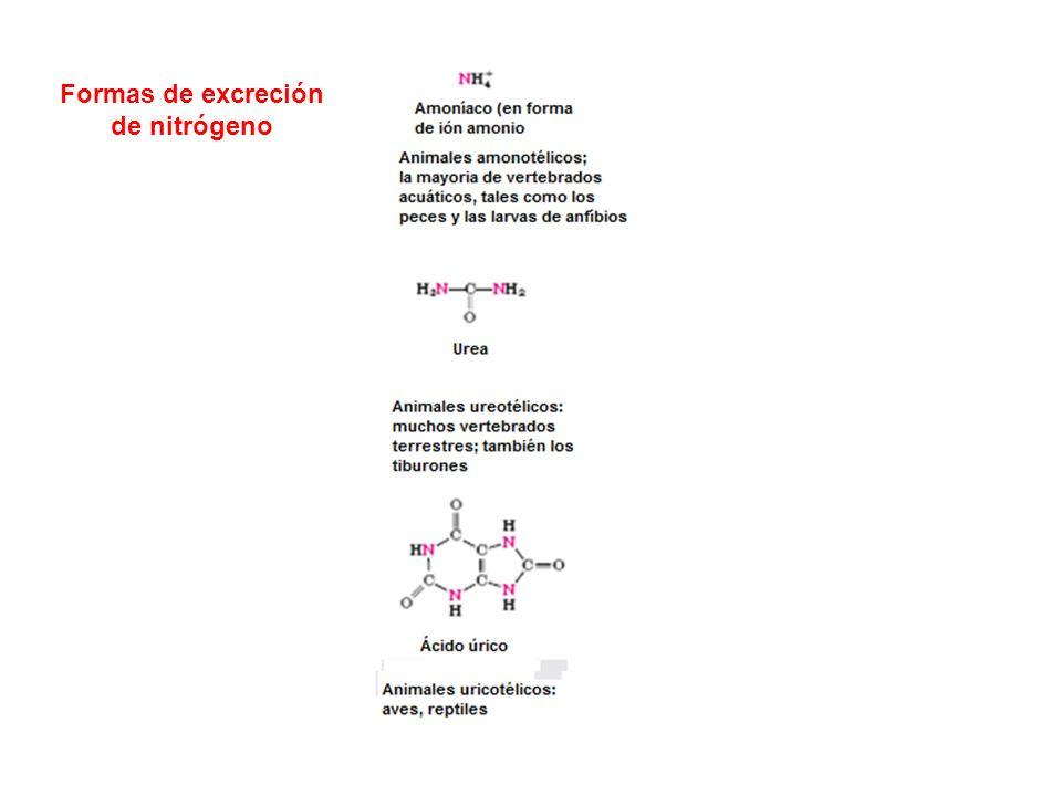 Formas de excreción de nitrógeno