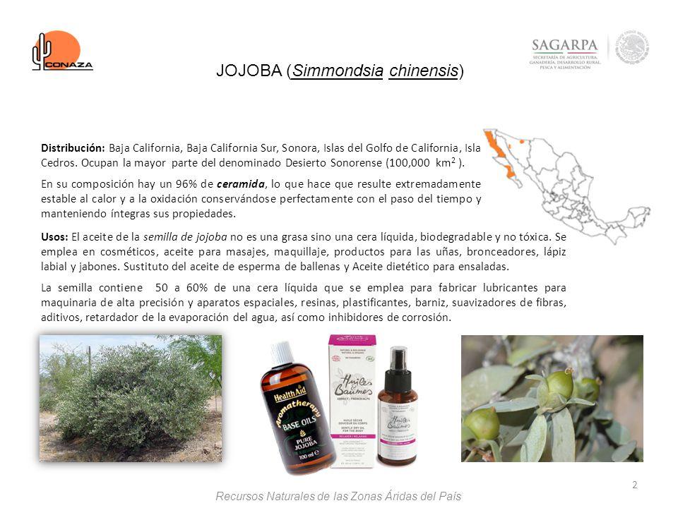 JOJOBA (Simmondsia chinensis)
