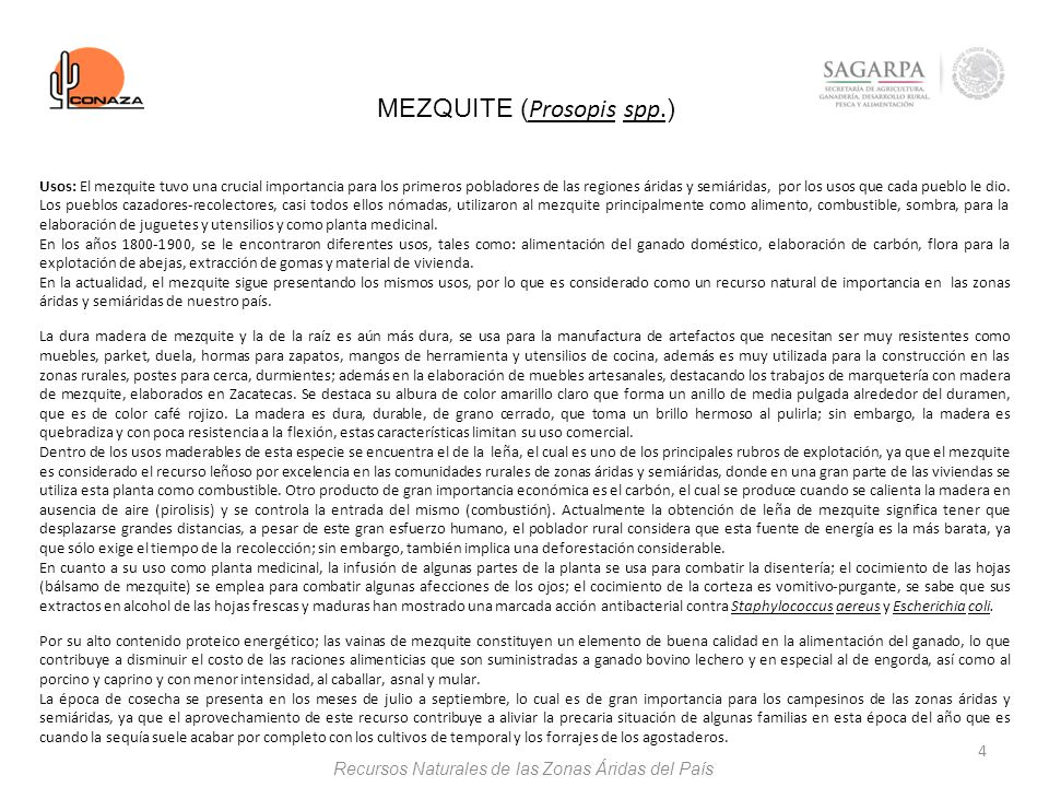 MEZQUITE (Prosopis spp.)