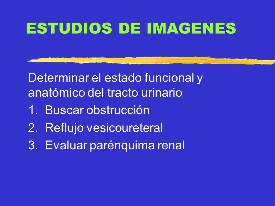 ESTUDIOS DE IMAGENES Determinar el estado funcional y anatómico del tracto urinario. 1. Buscar obstrucción.