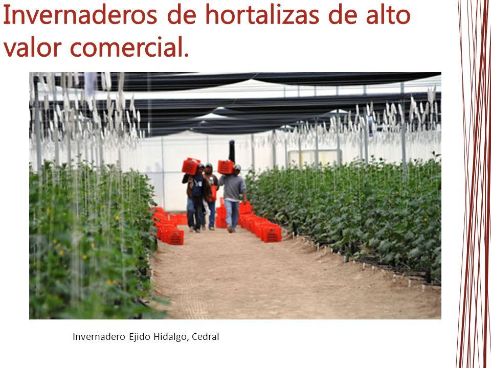 Invernaderos de hortalizas de alto valor comercial.