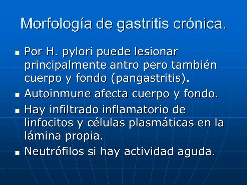 Morfología de gastritis crónica.