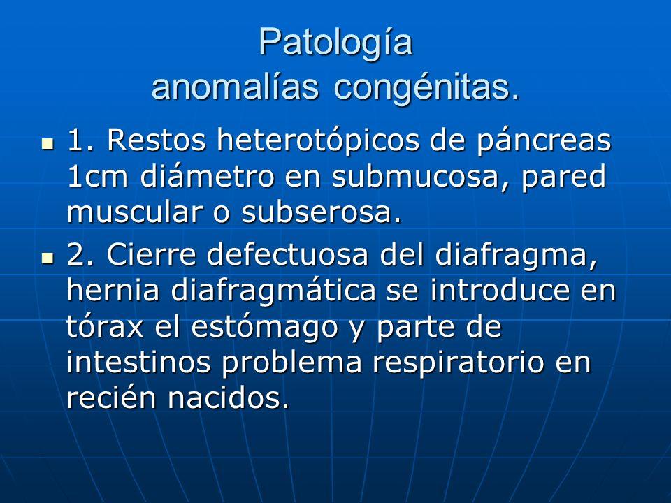 Patología anomalías congénitas.
