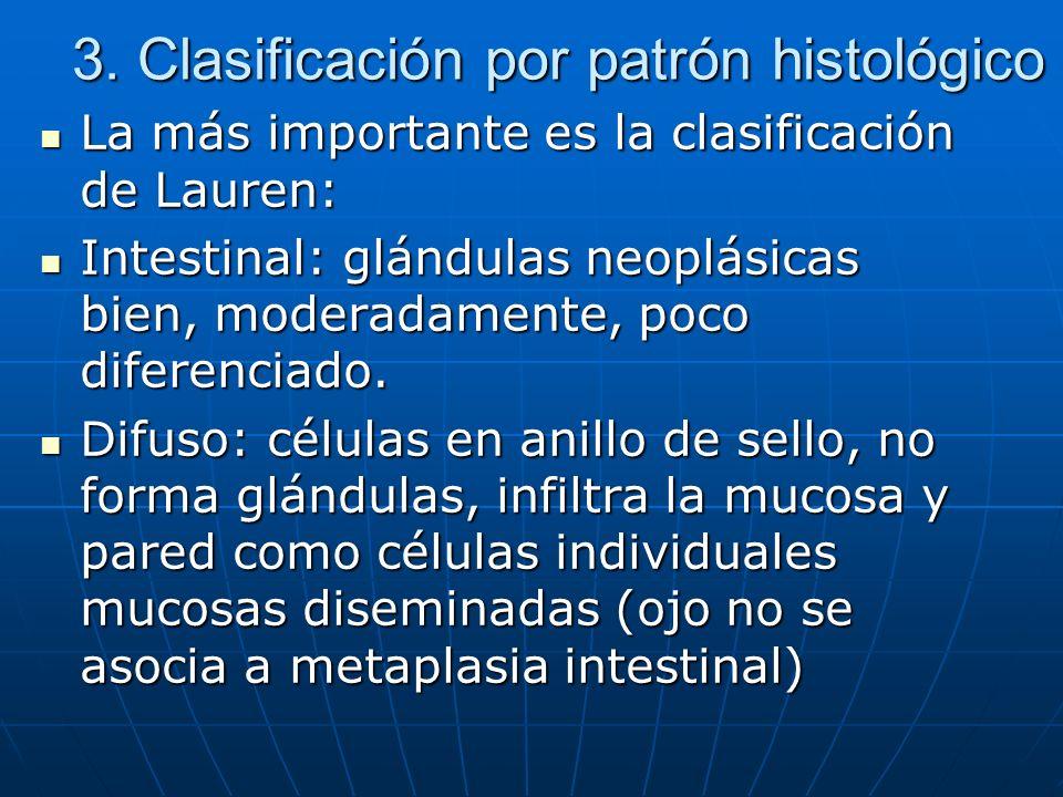 3. Clasificación por patrón histológico