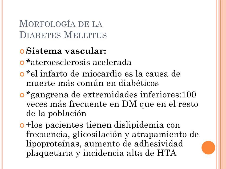 Morfología de la Diabetes Mellitus