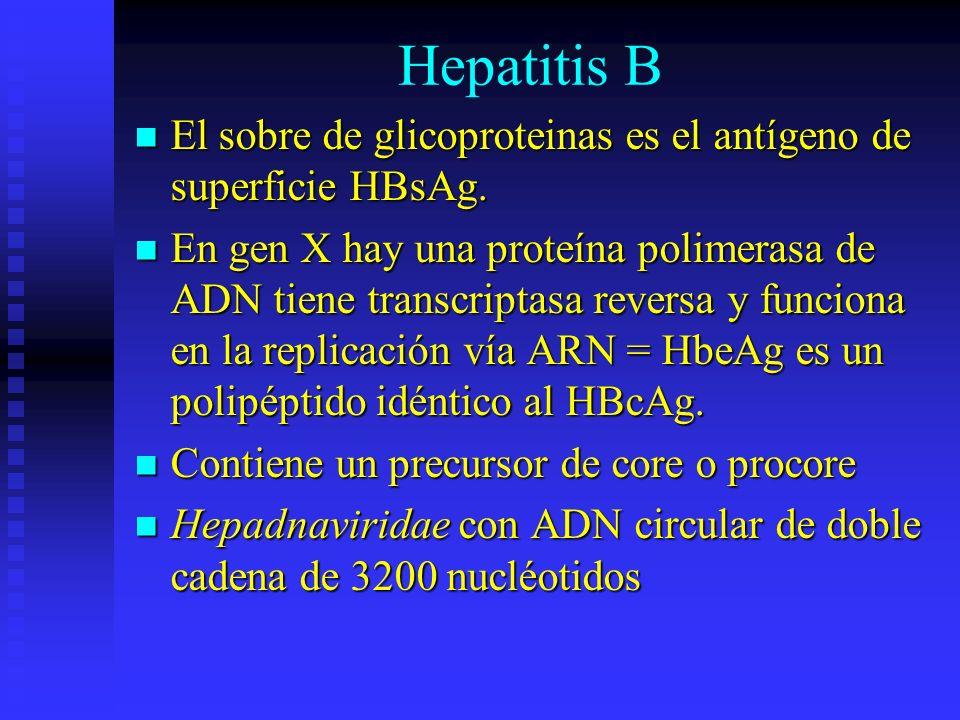 Hepatitis B El sobre de glicoproteinas es el antígeno de superficie HBsAg.