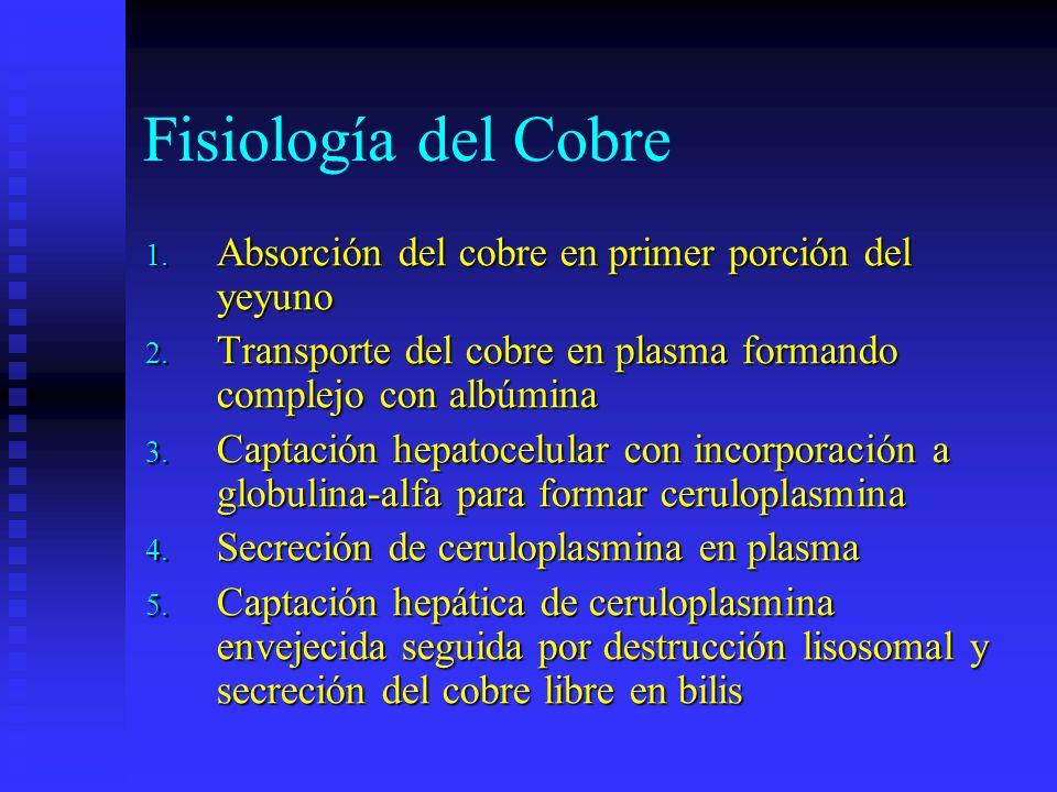 Fisiología del Cobre Absorción del cobre en primer porción del yeyuno