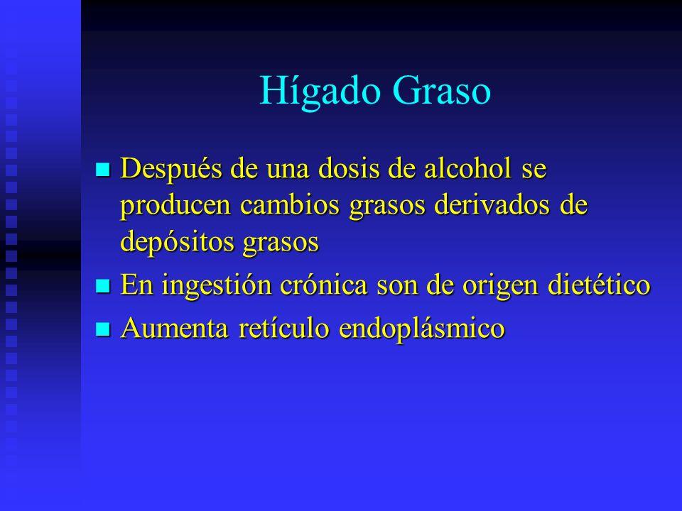 Hígado Graso Después de una dosis de alcohol se producen cambios grasos derivados de depósitos grasos.
