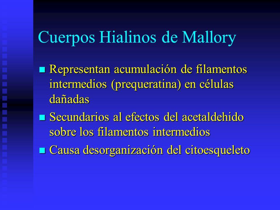 Cuerpos Hialinos de Mallory