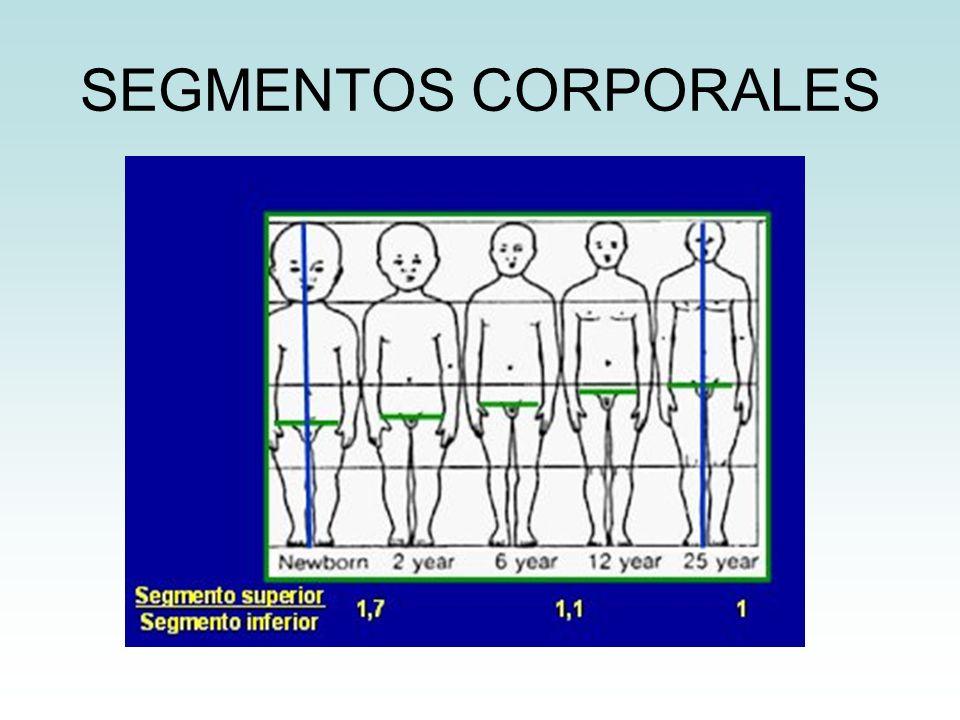 SEGMENTOS CORPORALES