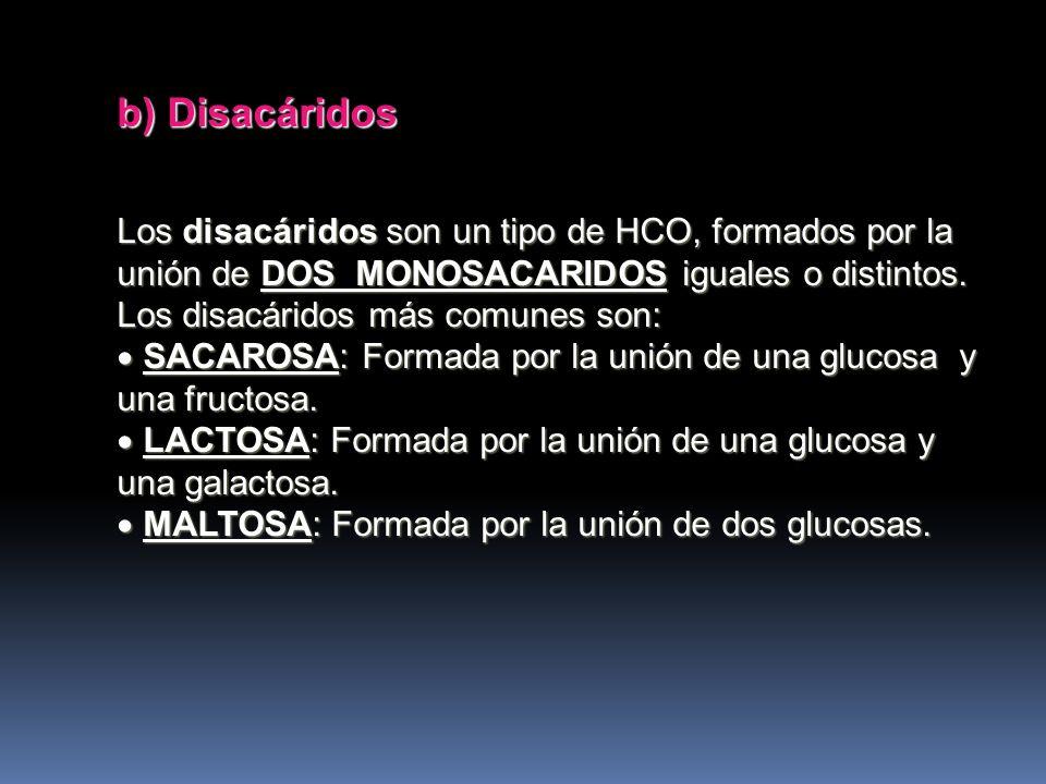 b) Disacáridos Los disacáridos son un tipo de HCO, formados por la unión de DOS MONOSACARIDOS iguales o distintos. Los disacáridos más comunes son: