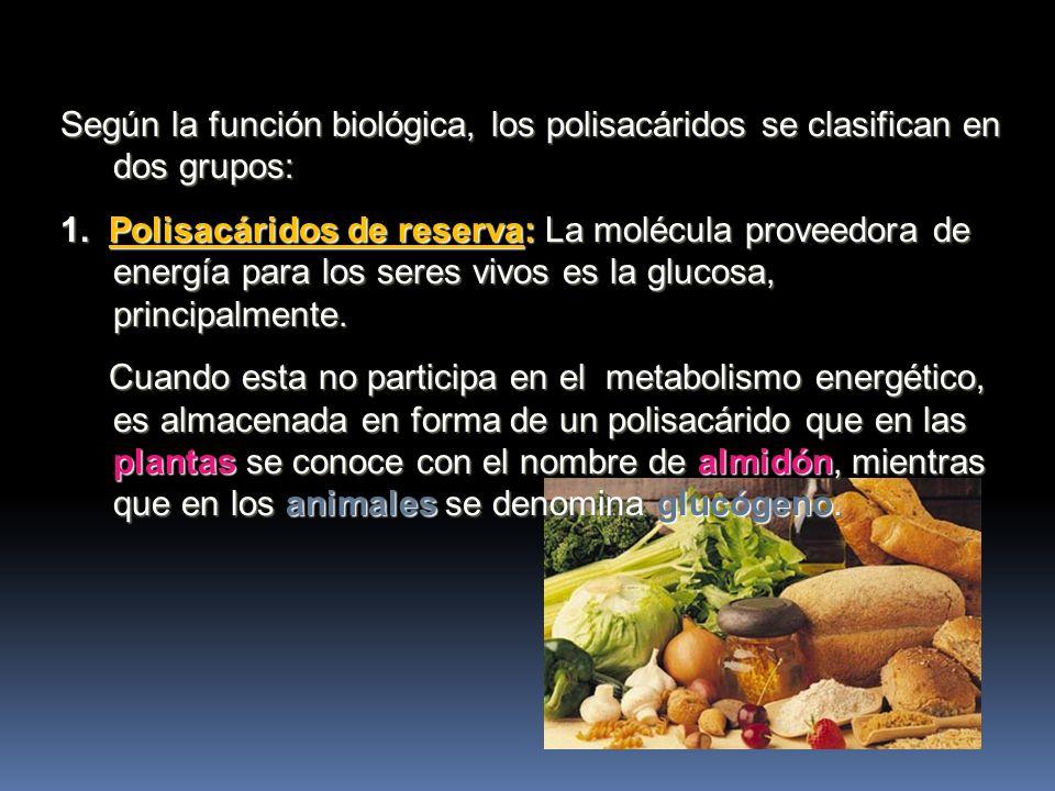 Según la función biológica, los polisacáridos se clasifican en dos grupos:
