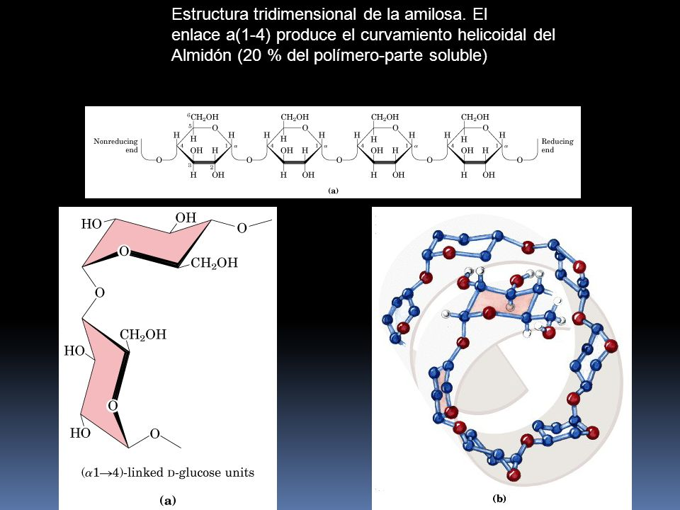 Estructura tridimensional de la amilosa. El