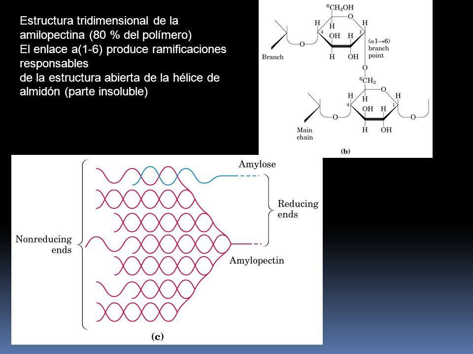 Estructura tridimensional de la amilopectina (80 % del polímero)