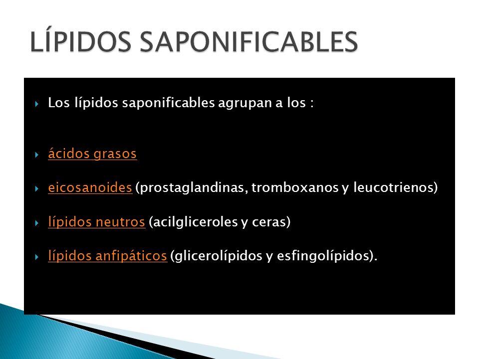 LÍPIDOS SAPONIFICABLES