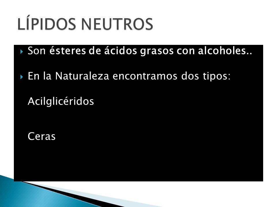 LÍPIDOS NEUTROS Son ésteres de ácidos grasos con alcoholes..