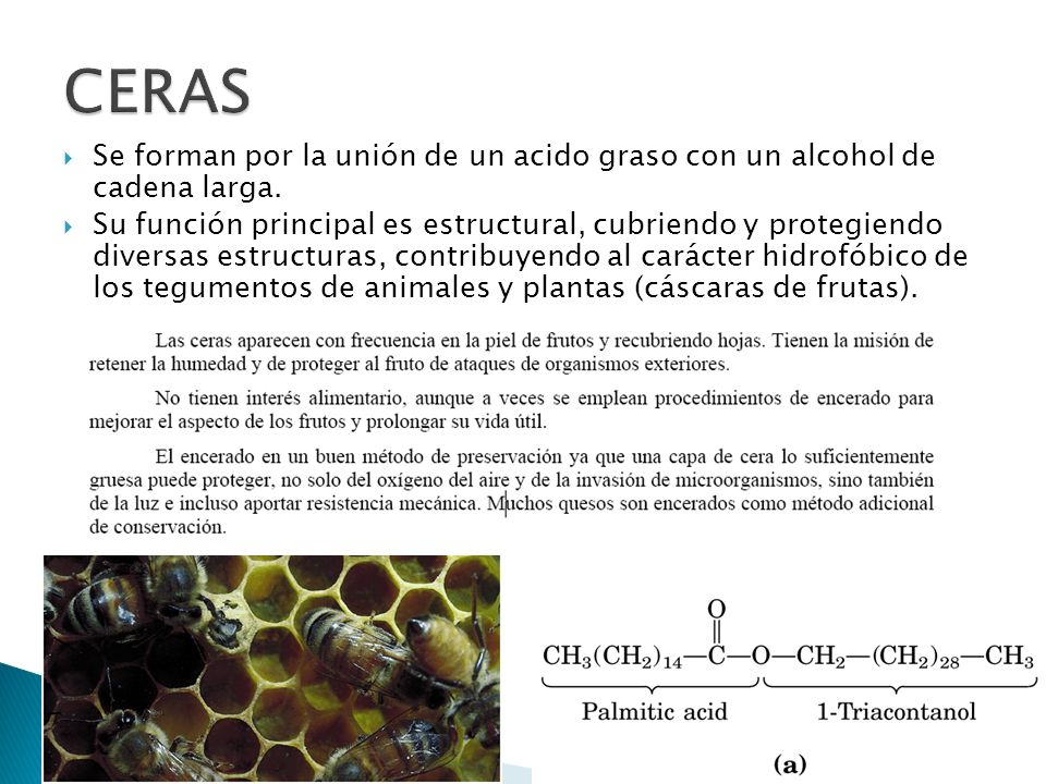 CERASSe forman por la unión de un acido graso con un alcohol de cadena larga.