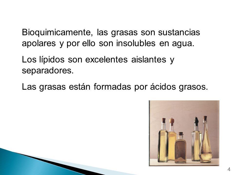 Los lípidos son excelentes aislantes y separadores.