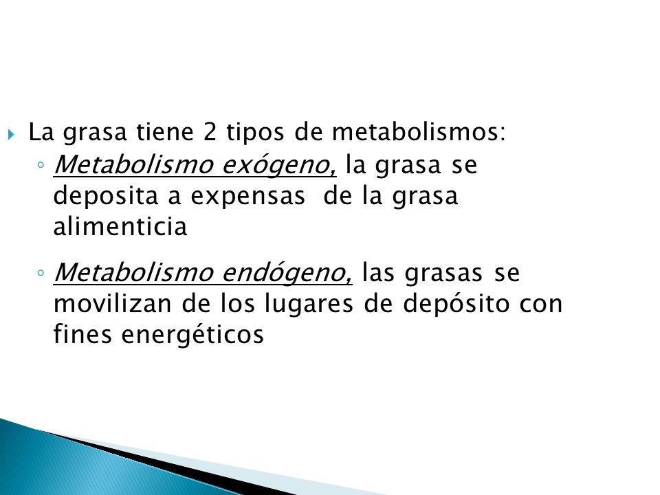 La grasa tiene 2 tipos de metabolismos: