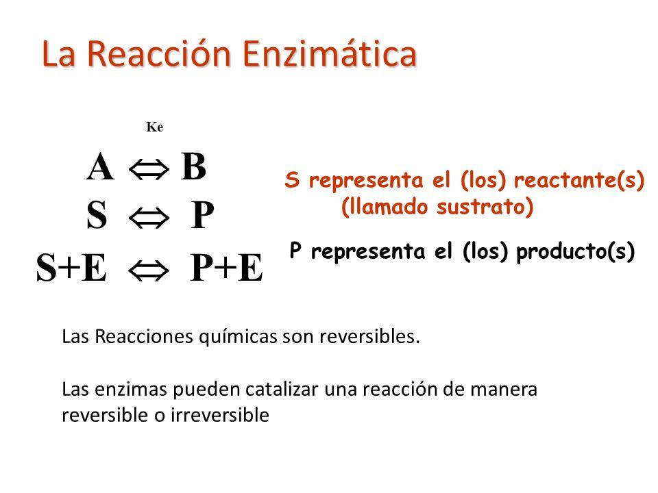 La Reacción Enzimática