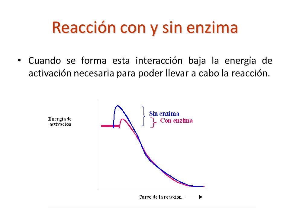 Reacción con y sin enzima