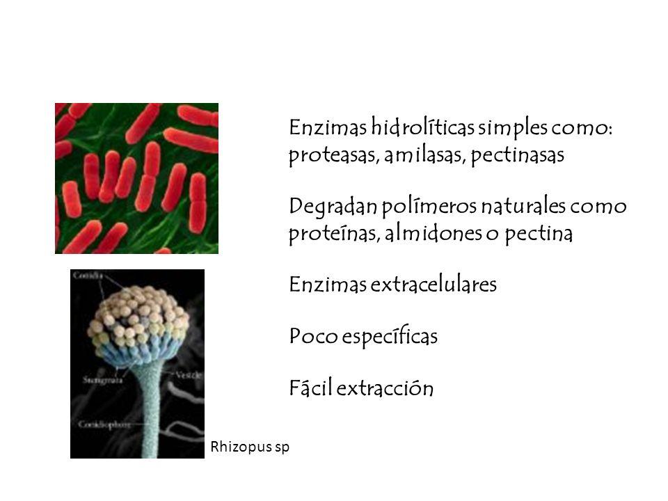 Enzimas hidrolíticas simples como: proteasas, amilasas, pectinasas
