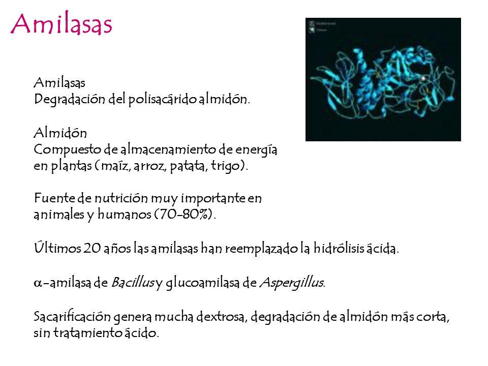 Amilasas Amilasas Degradación del polisacárido almidón. Almidón