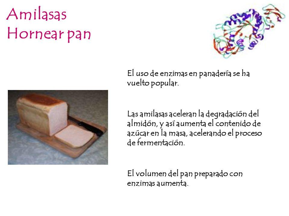 Amilasas Hornear pan. El uso de enzimas en panadería se ha vuelto popular.