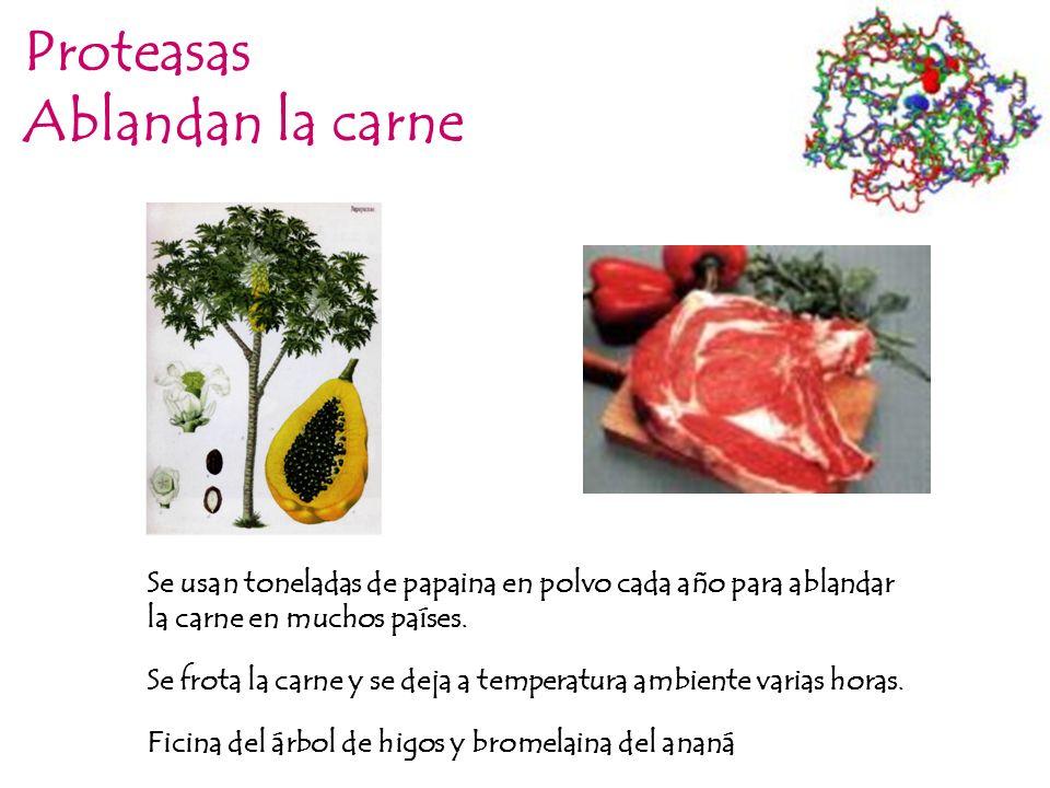 Proteasas Ablandan la carne