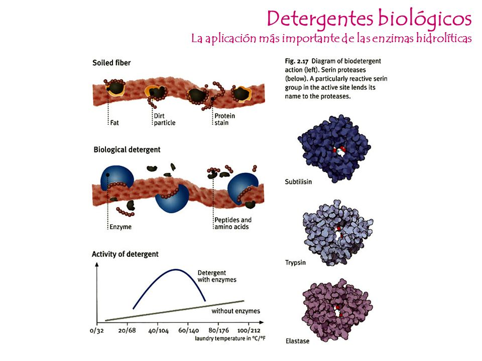 Detergentes biológicos