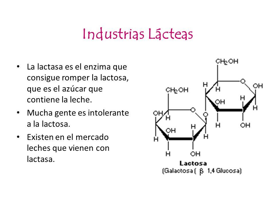 Industrias LácteasLa lactasa es el enzima que consigue romper la lactosa, que es el azúcar que contiene la leche.