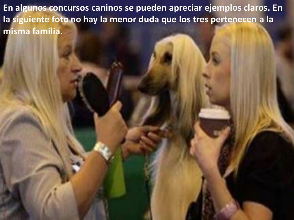 En algunos concursos caninos se pueden apreciar ejemplos claros