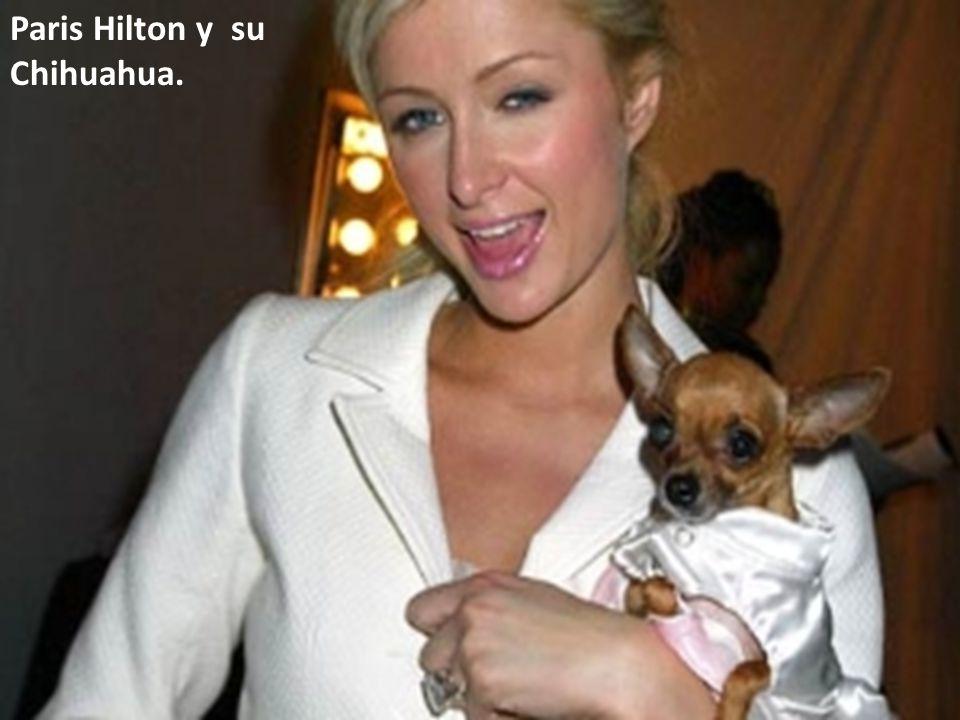 Paris Hilton y su Chihuahua.