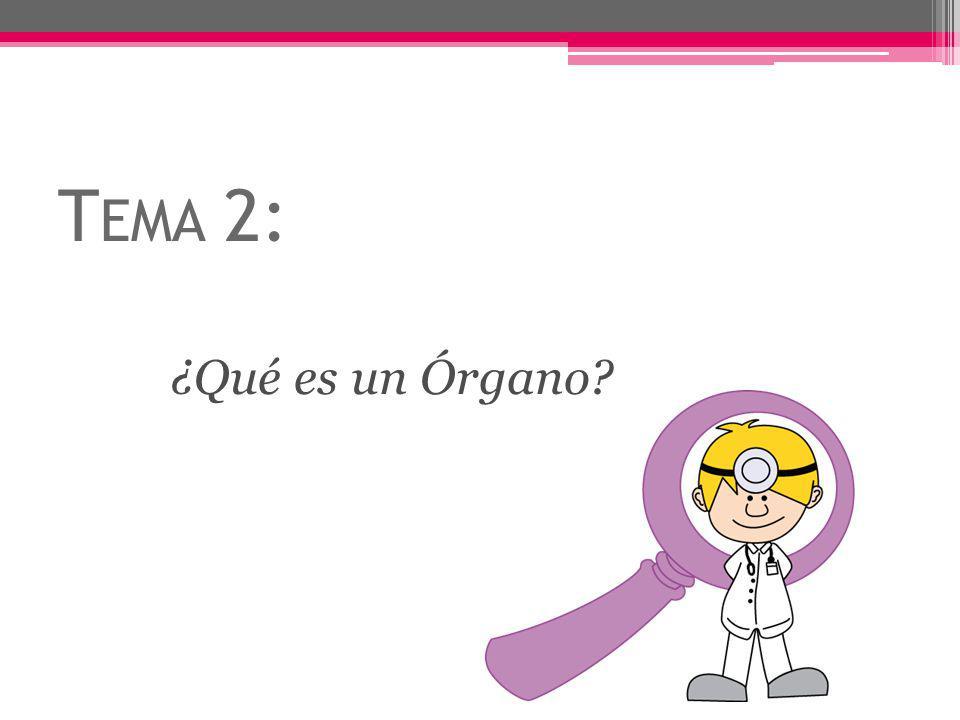 Tema 2: ¿Qué es un Órgano