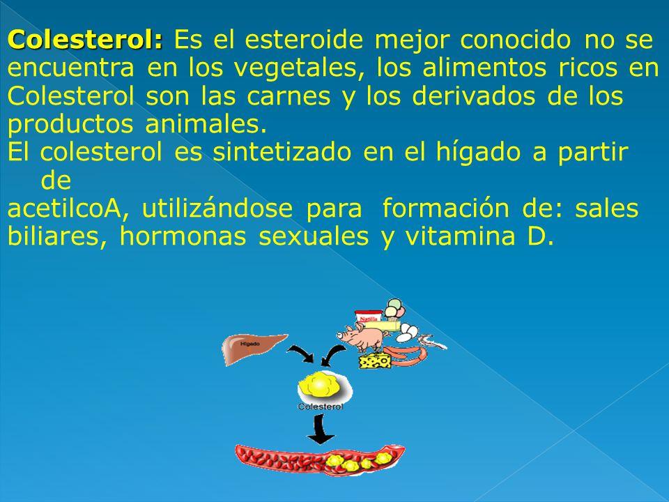 Colesterol: Es el esteroide mejor conocido no se