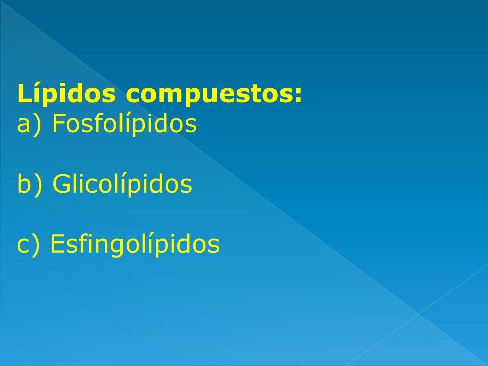 Lípidos compuestos: Fosfolípidos b) Glicolípidos c) Esfingolípidos