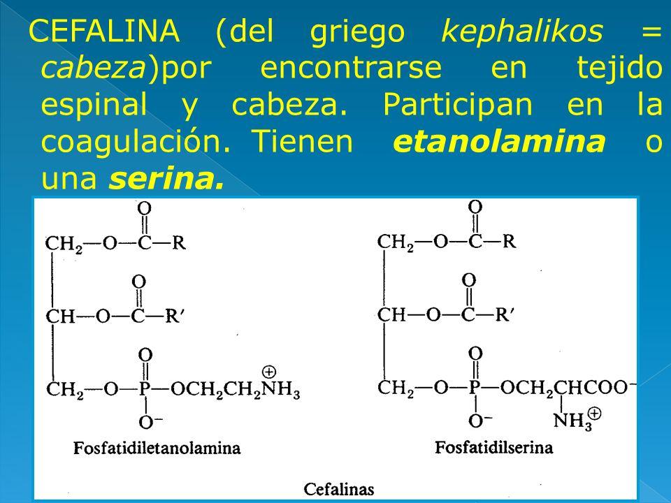 CEFALINA (del griego kephalikos = cabeza)por encontrarse en tejido espinal y cabeza.