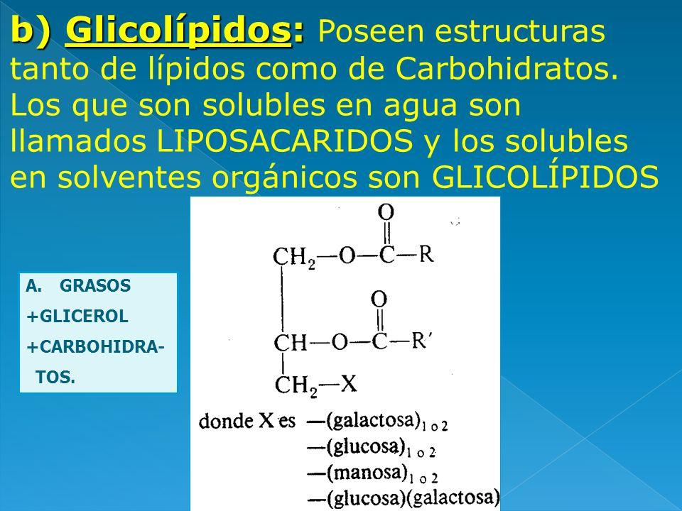 b) Glicolípidos: Poseen estructuras