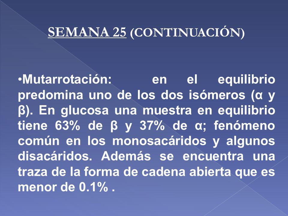 SEMANA 25 (CONTINUACIÓN)